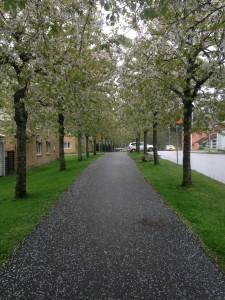 Furumoss Alley